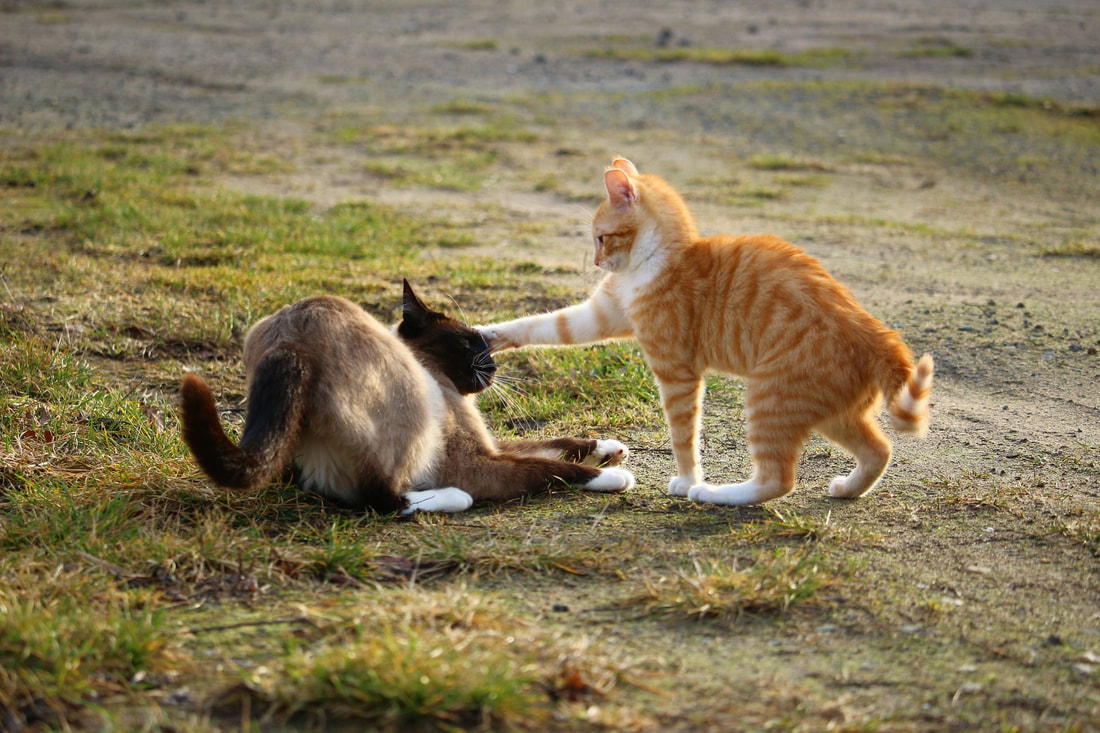 Orange cat pawing at a brown cat on the dry grass